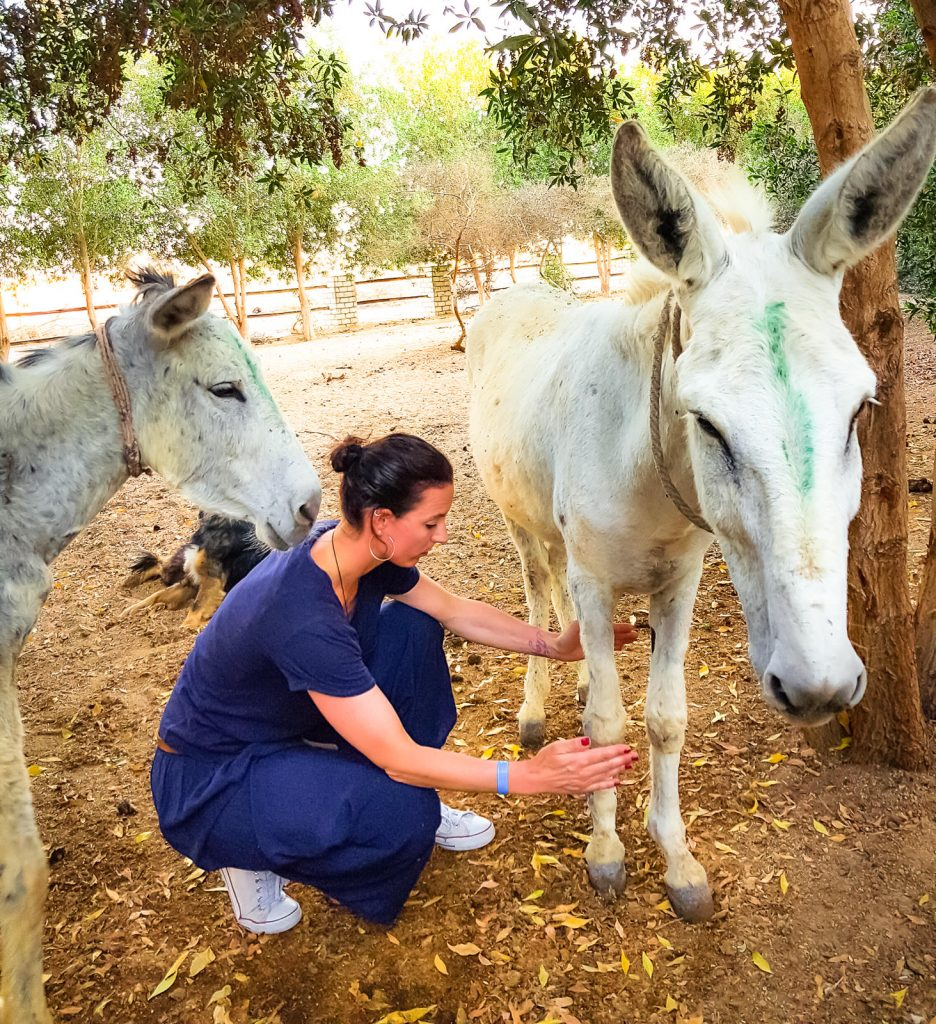 Tierarztpraxis Katrin Wontorra - Energiemedizin