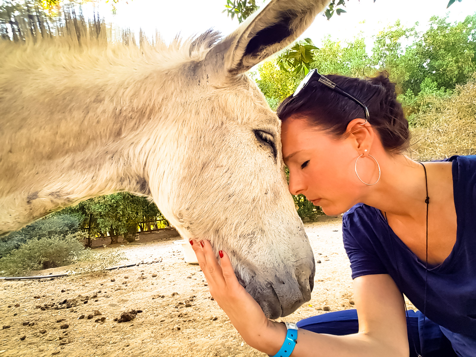 Tierarztpraxis Katrin Wontorra - Tiergespraeche