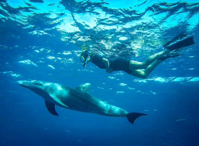 Erlebnisseminar-am-Meer-Schwimmen-mit-Delphin