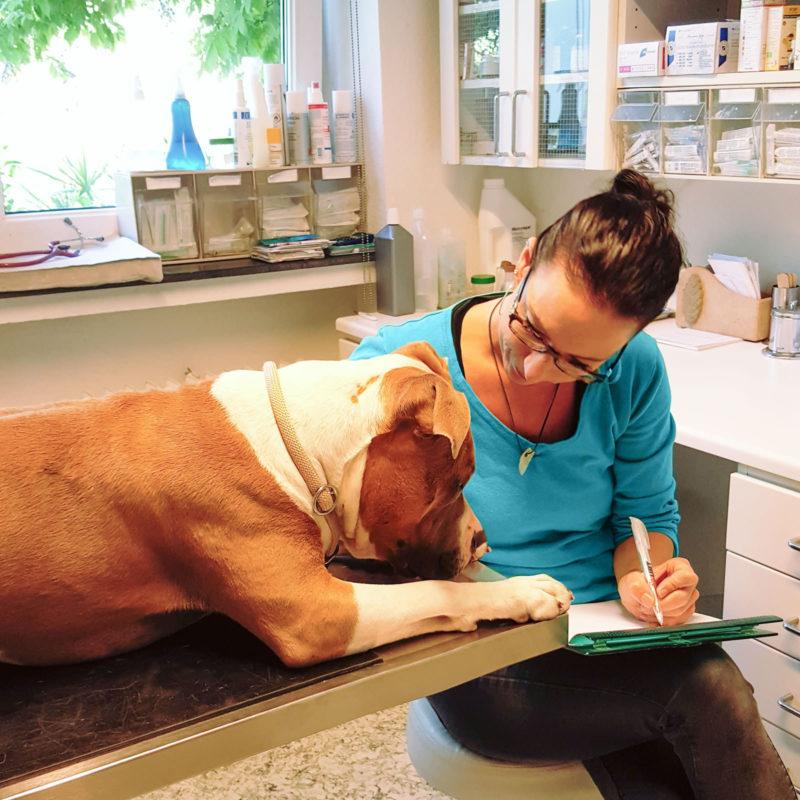 Praxis-Besprechungen-mit-Hund