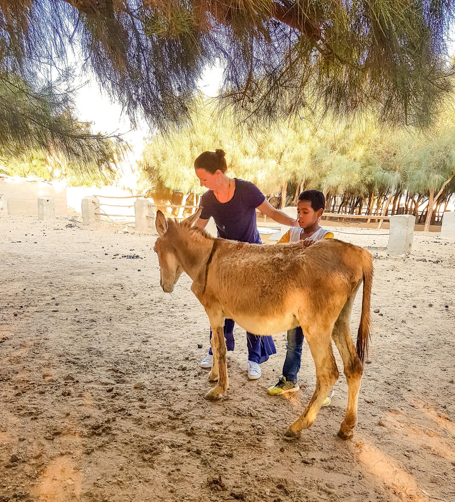 Tierarztpraxis Dr Wontorra- Lehre der Energiearbeit