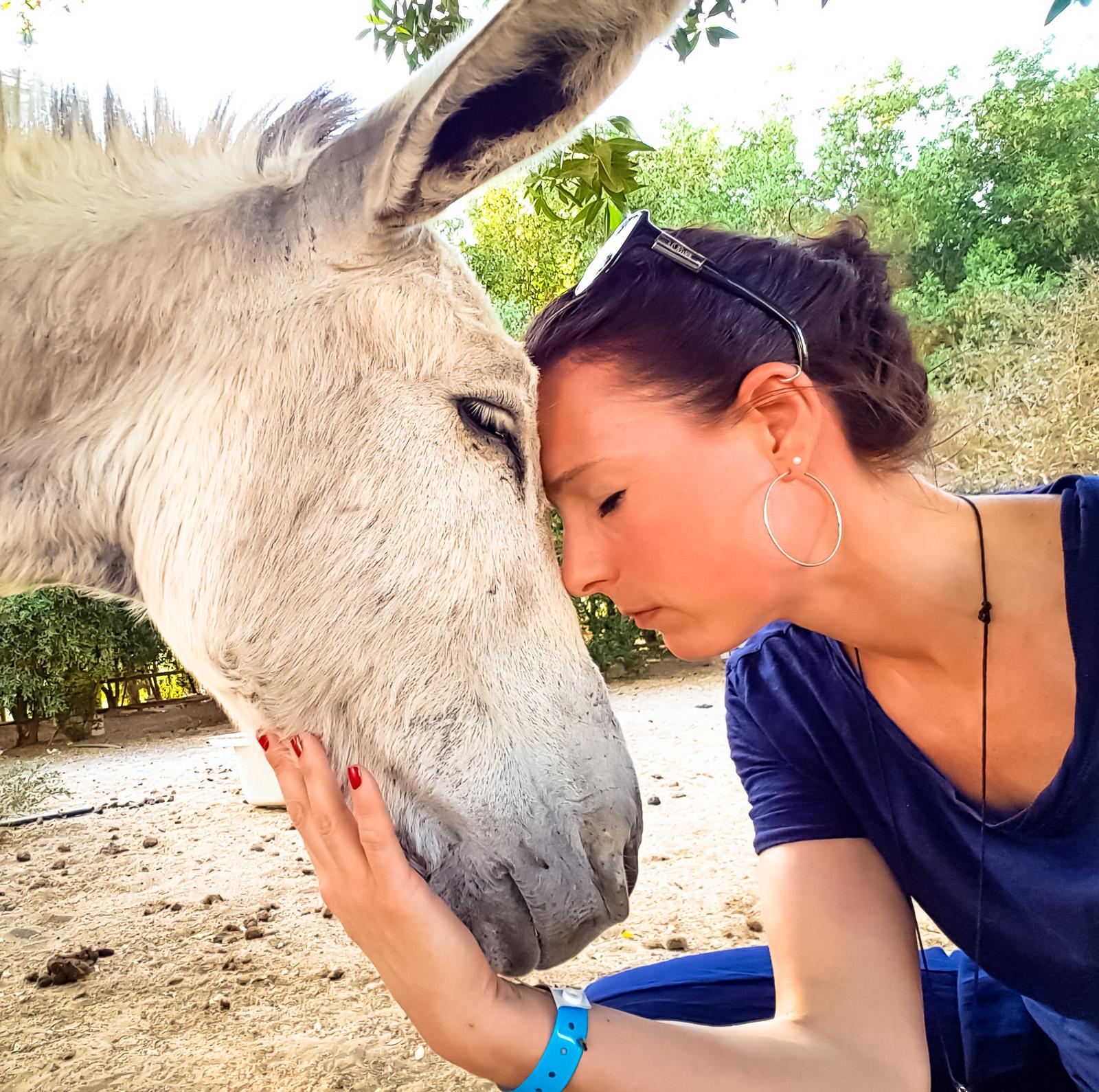 Tierarztpraxis Dr Wontorra- Mentale Tiergespraeche