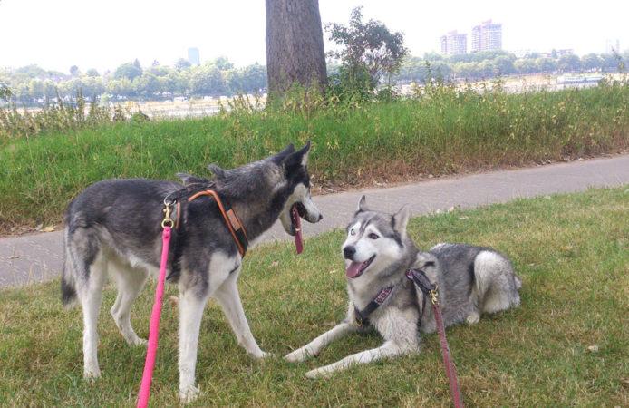Meeko und Kimba Feedback Tierarzt Dr Wontorra