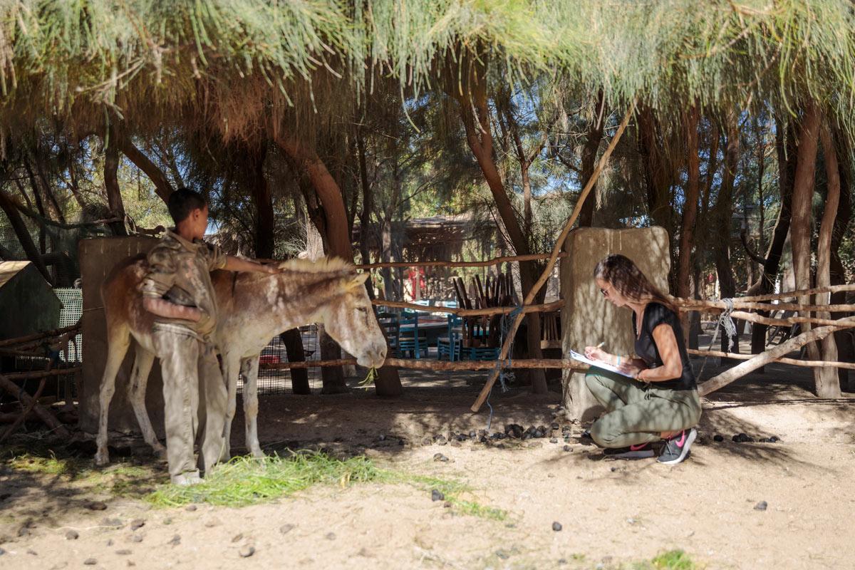 Feedback Manuela Seminar Tierkommunikation Wontorra