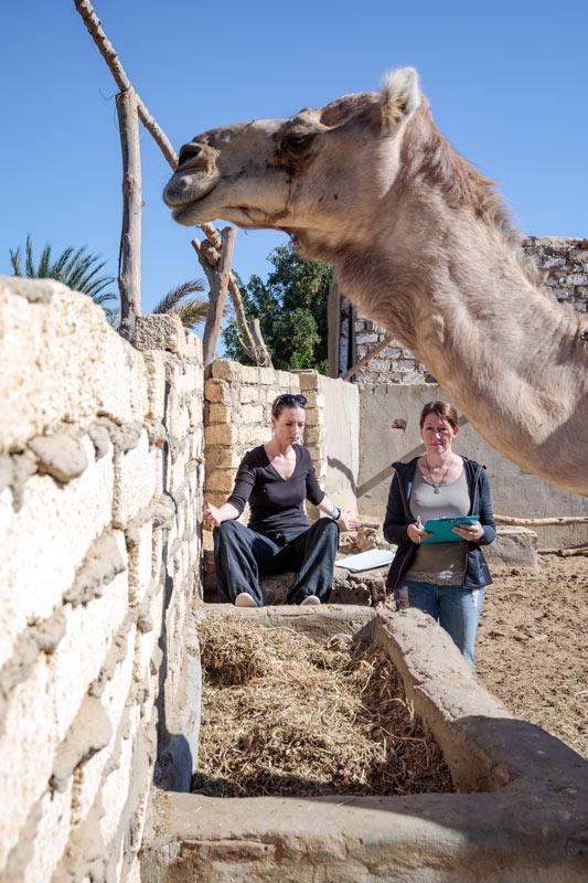 Feedback Seminar Aegypten Tierarzt Dr Wontorra Catherine mit Dr Wontorra
